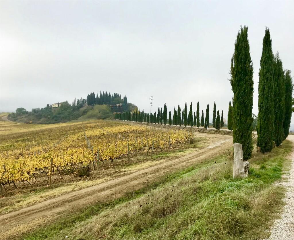Treeline of narrow pines leading to a villa near Castelfiorentino