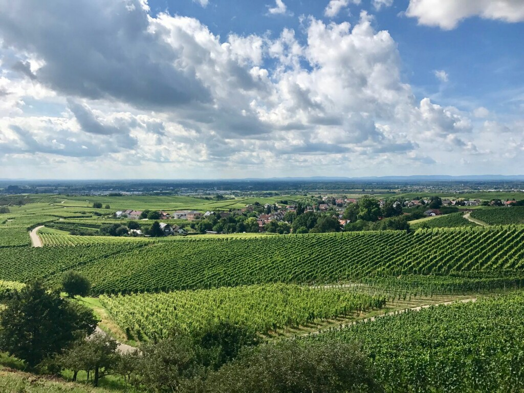 Valley of vineyards on Ortenauer wine route