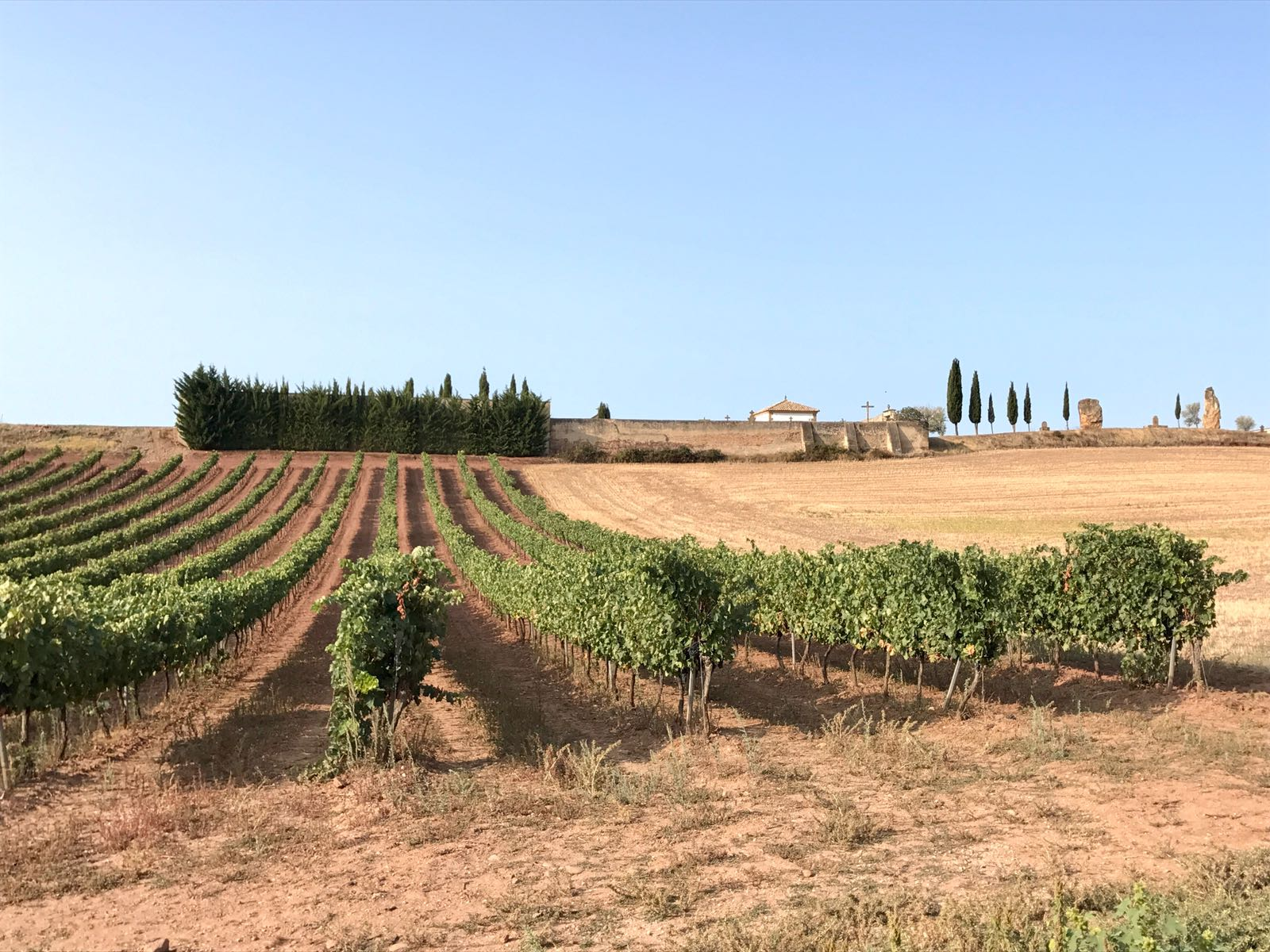 Vineyards outside the town of Cirauqui