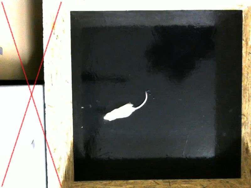Crop right square of the frame