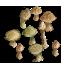 mushrooms-tile.png
