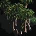 palms-tile.png