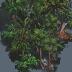 rainforest-tile.png