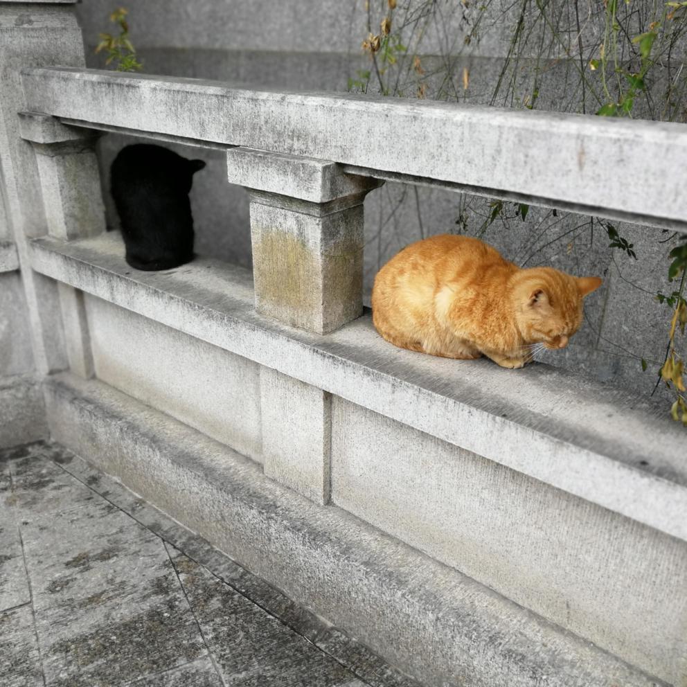 阅江楼偶遇两只猫