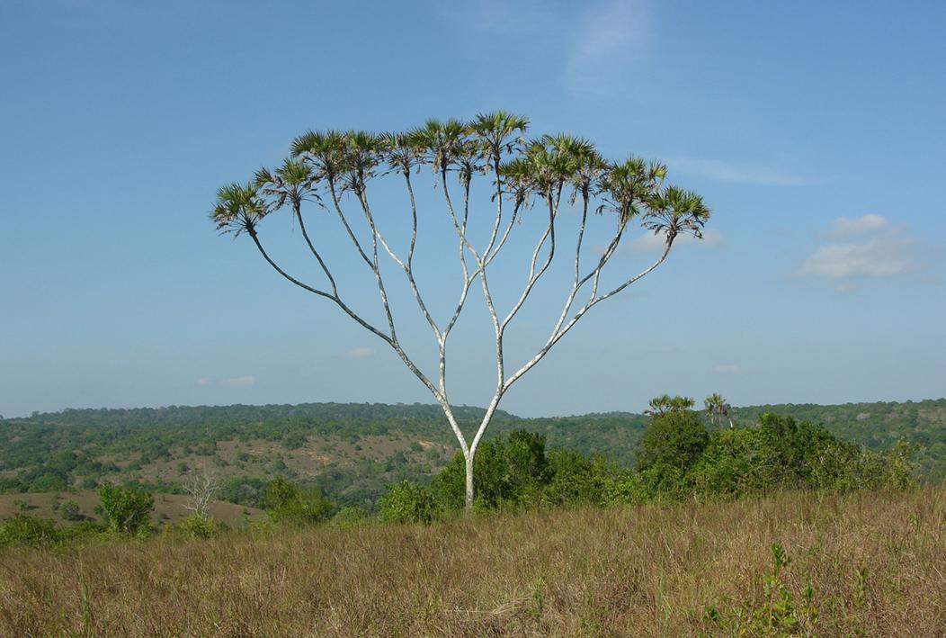 现实中的树