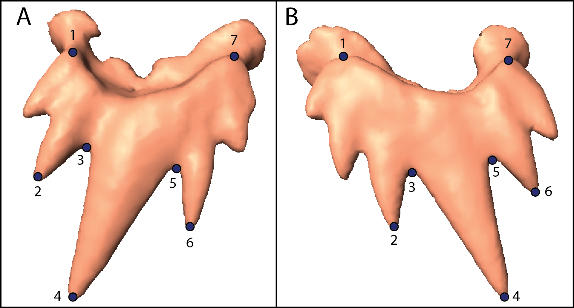 Landmarks on a tooth